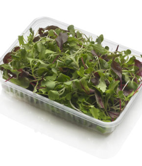 Micro Salad Mix - Mix insalate